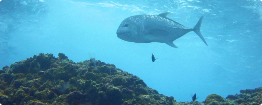 海の魚の画像 | 株式会社イシグロ