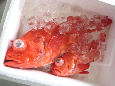 アコウダイのさばき方&刺身 釣具のイシグロ  釣り情報サイト