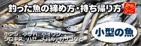 釣った魚の締め方・持ち帰り方(小型の魚編)