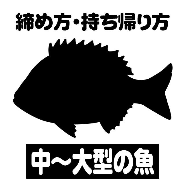 中~大型魚 締め方・持ち帰り方