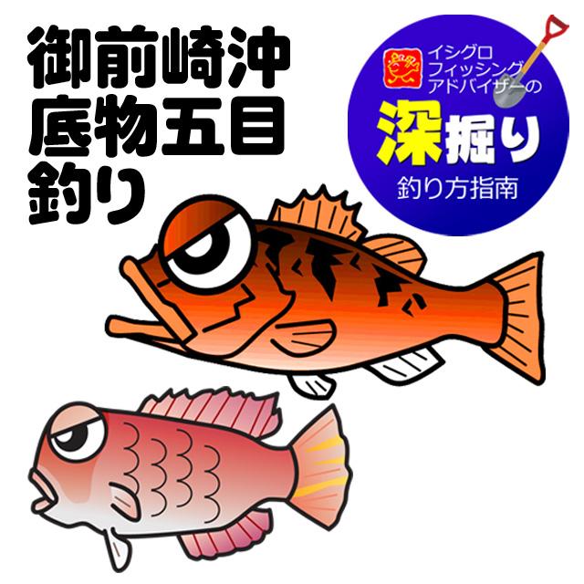 御前崎沖 底物五目釣り(レンコ鯛・鬼カサゴ・甘鯛など)<深掘り>