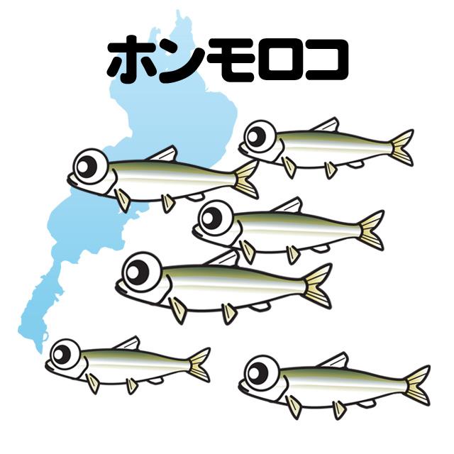 琵琶湖のホンモロコ釣り メイン画像