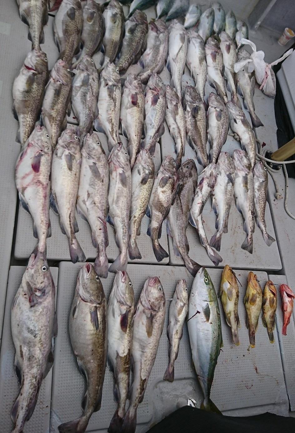 6名のチャーター。竿頭は10匹と大漁でした。