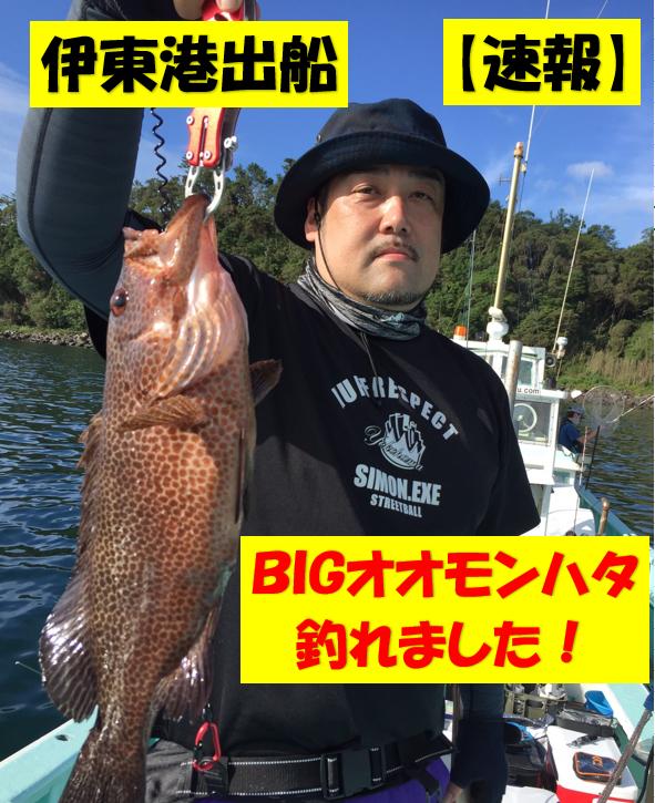 伊東港 達丸さん オオモンハタ 46㎝/48cm/53㎝ 釣れました!