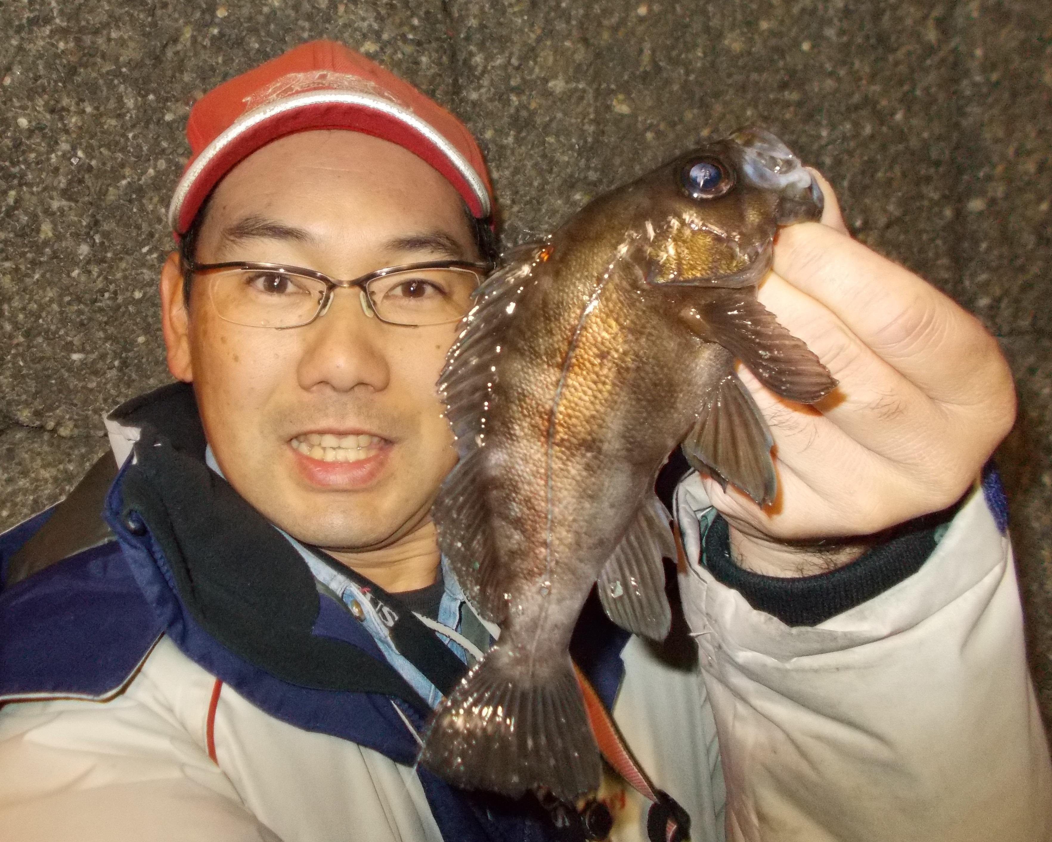 初釣りからボウズ続きでしたがようやく釣れました。20cm級連発!浜名湖でもこのサイズのメバルが釣れますよ。