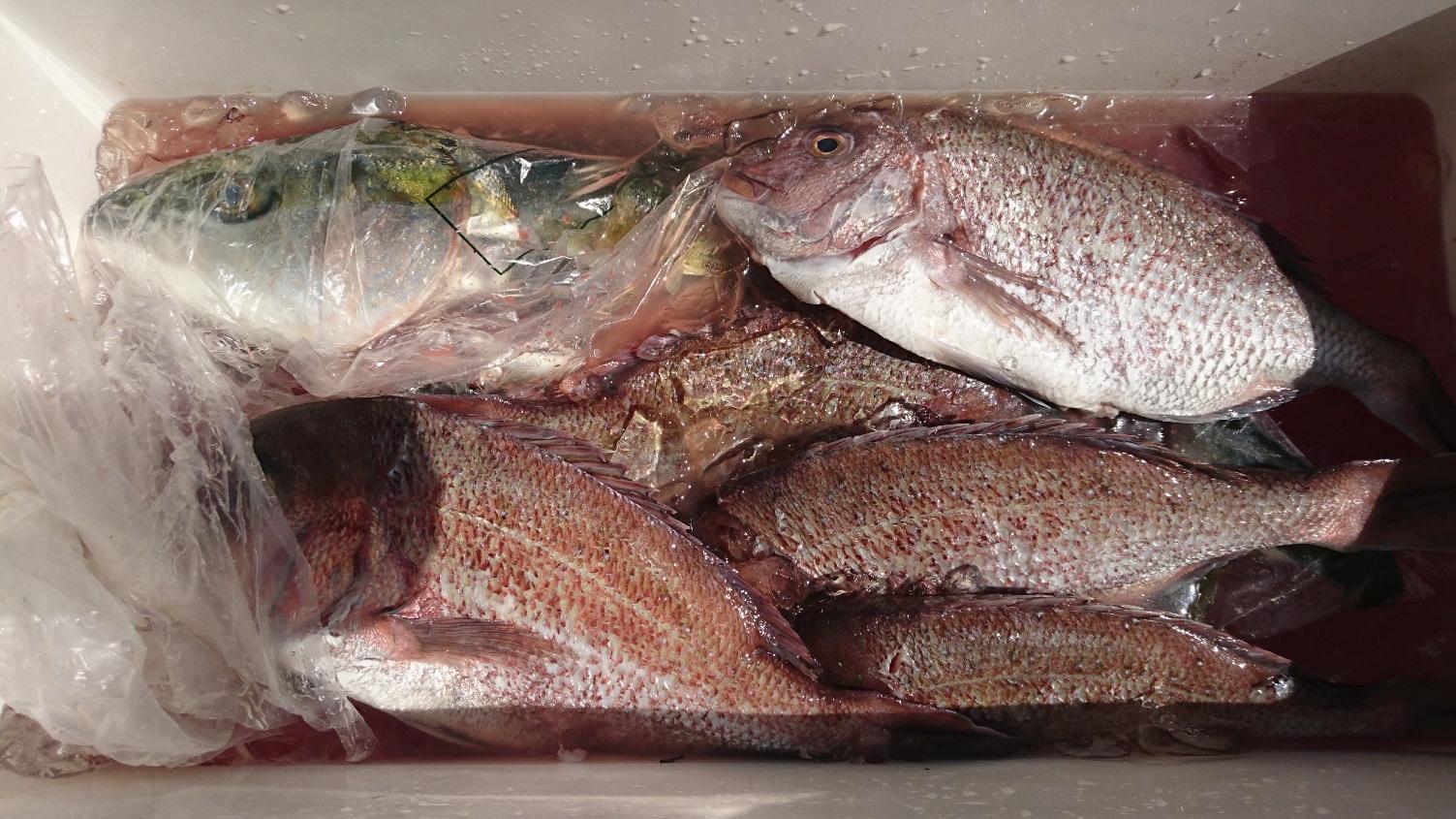 沖にいるお魚を手軽に釣ることができます♪