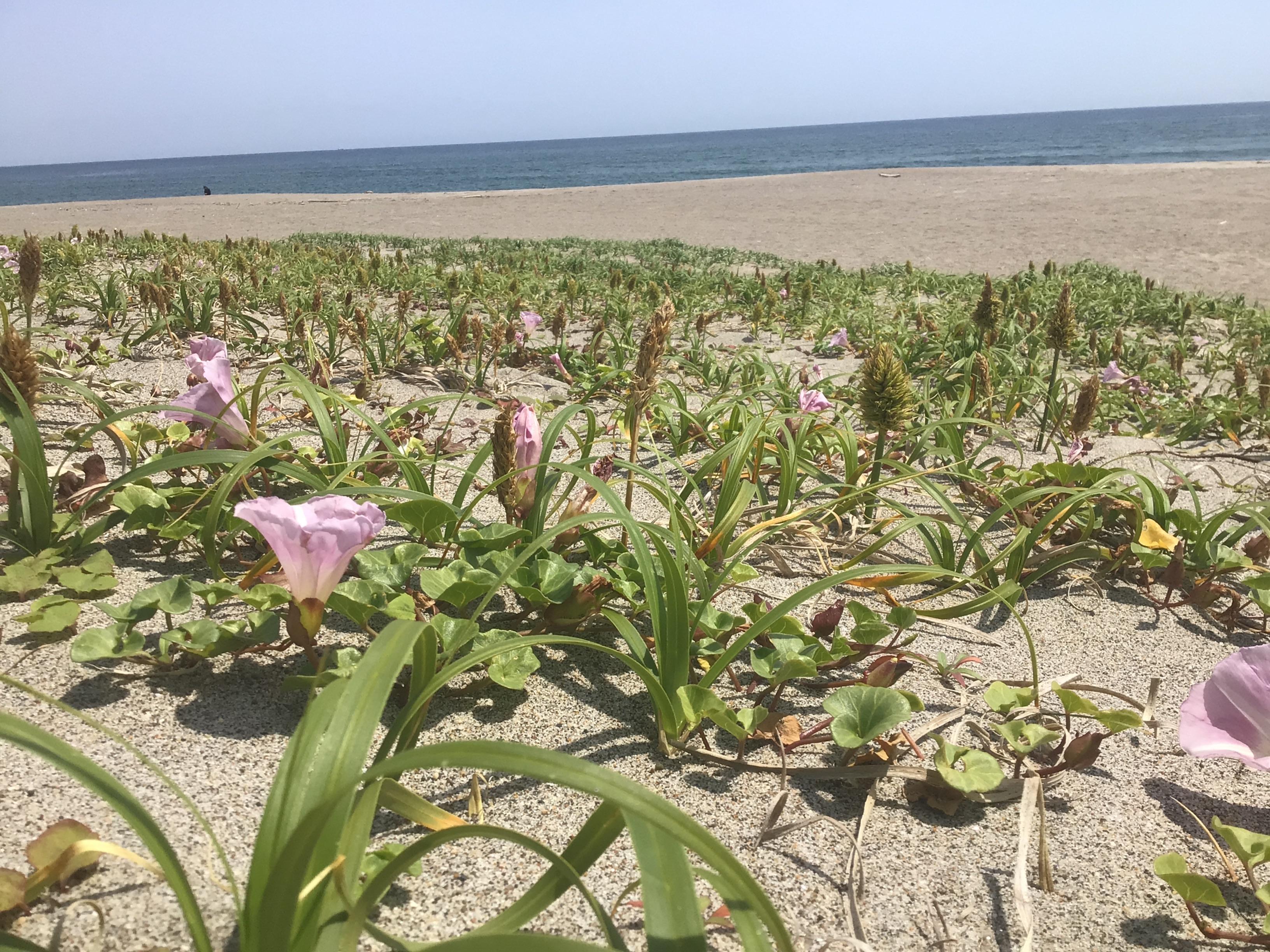 浜は春満開デス❗️
