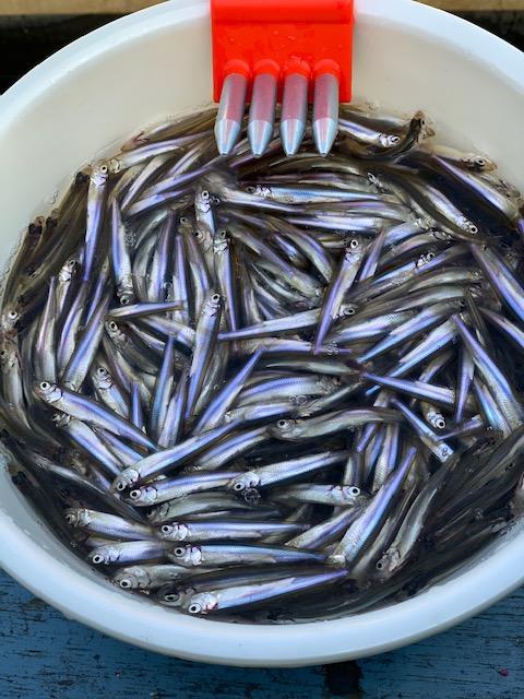 今年の諏訪湖は豊漁です。みなとは3月末までドーム船営業予定。
