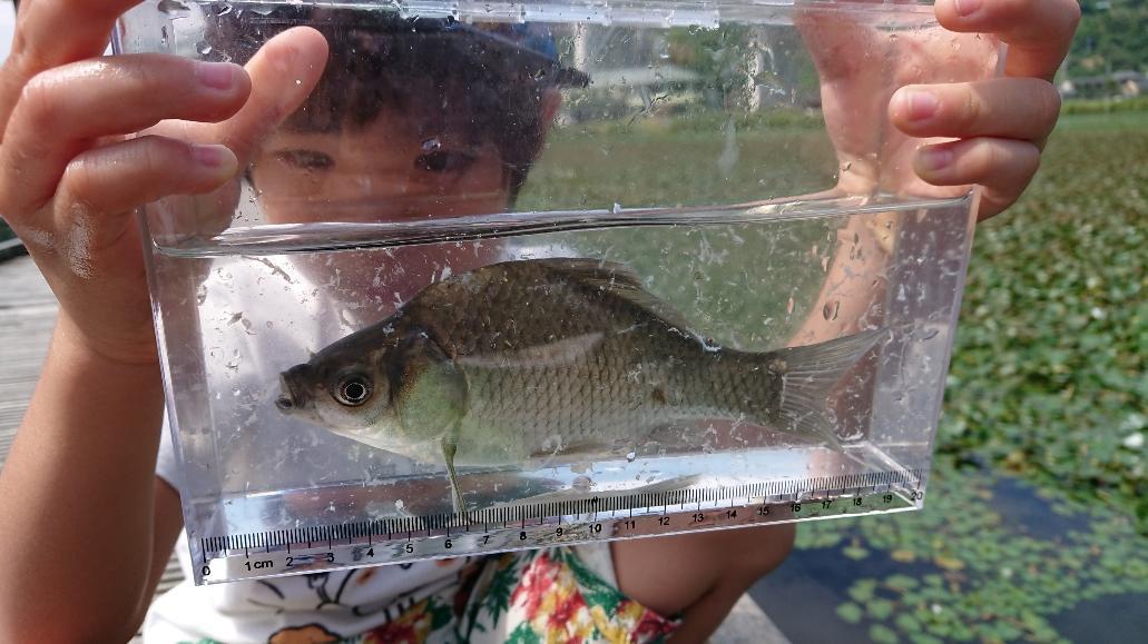 釣った魚を観察してみよう!