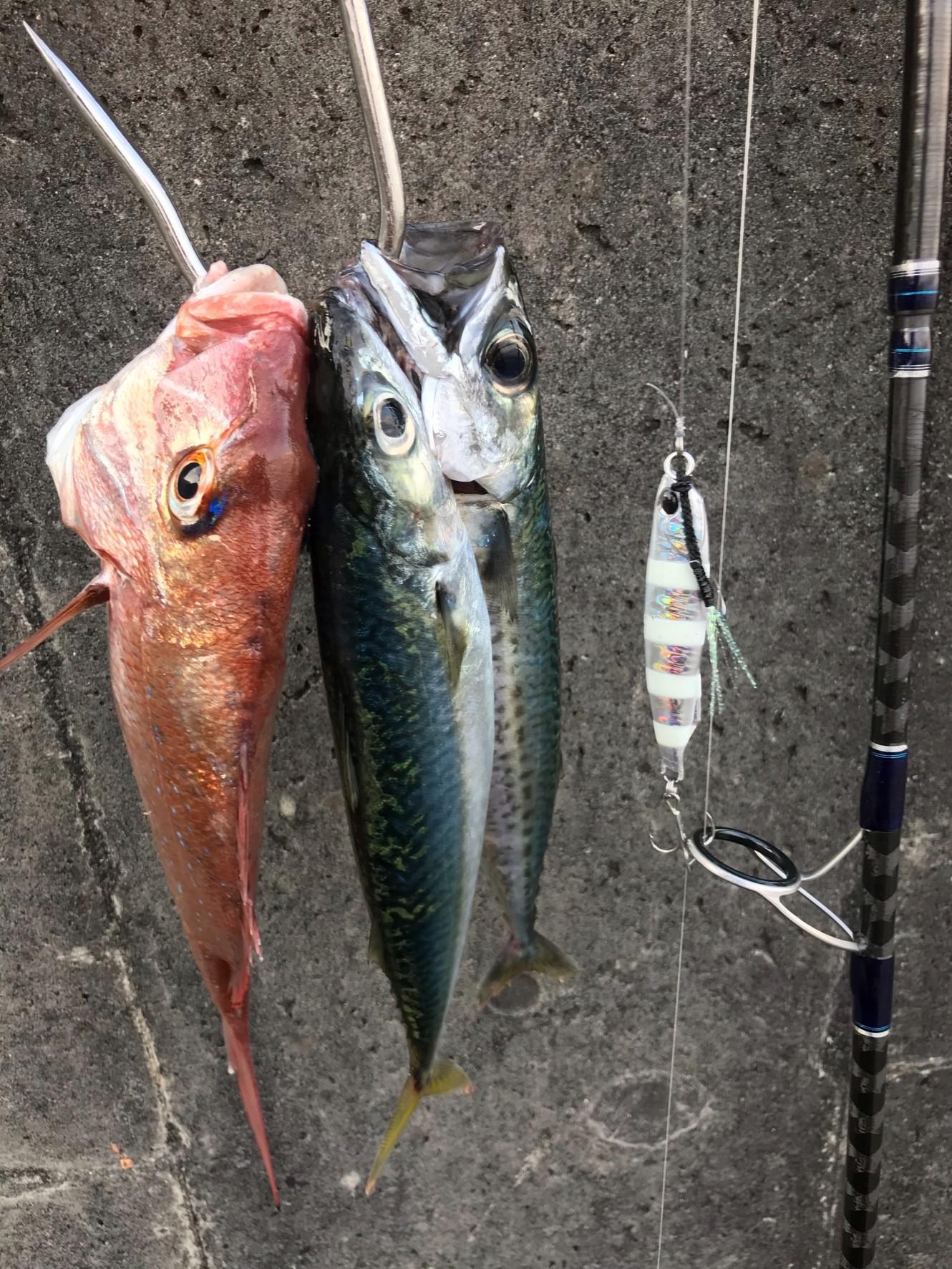 サバも釣れました!