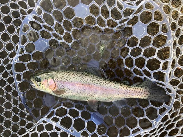 ヒットルアーはクーガ・トレモ・ガメクラ等のフローティングプラグが良く釣れました。