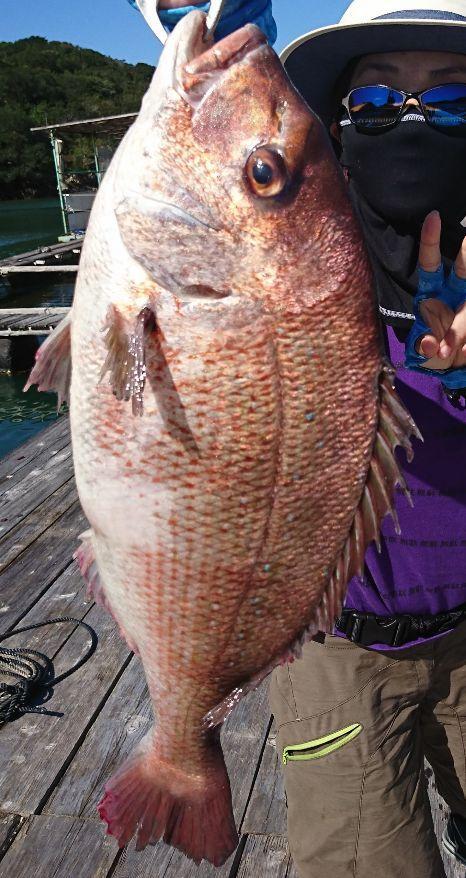 こんな大鯛が釣れちゃいますよ♪