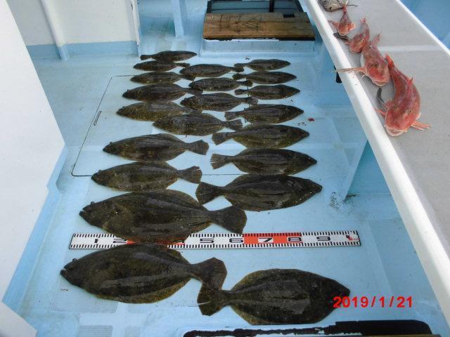 最盛期並みに【ど太い】ヒラメがワヤぐいッ(・∀・) 片舷21枚、反対側で11枚の船中32枚ッ(゚∀゚)