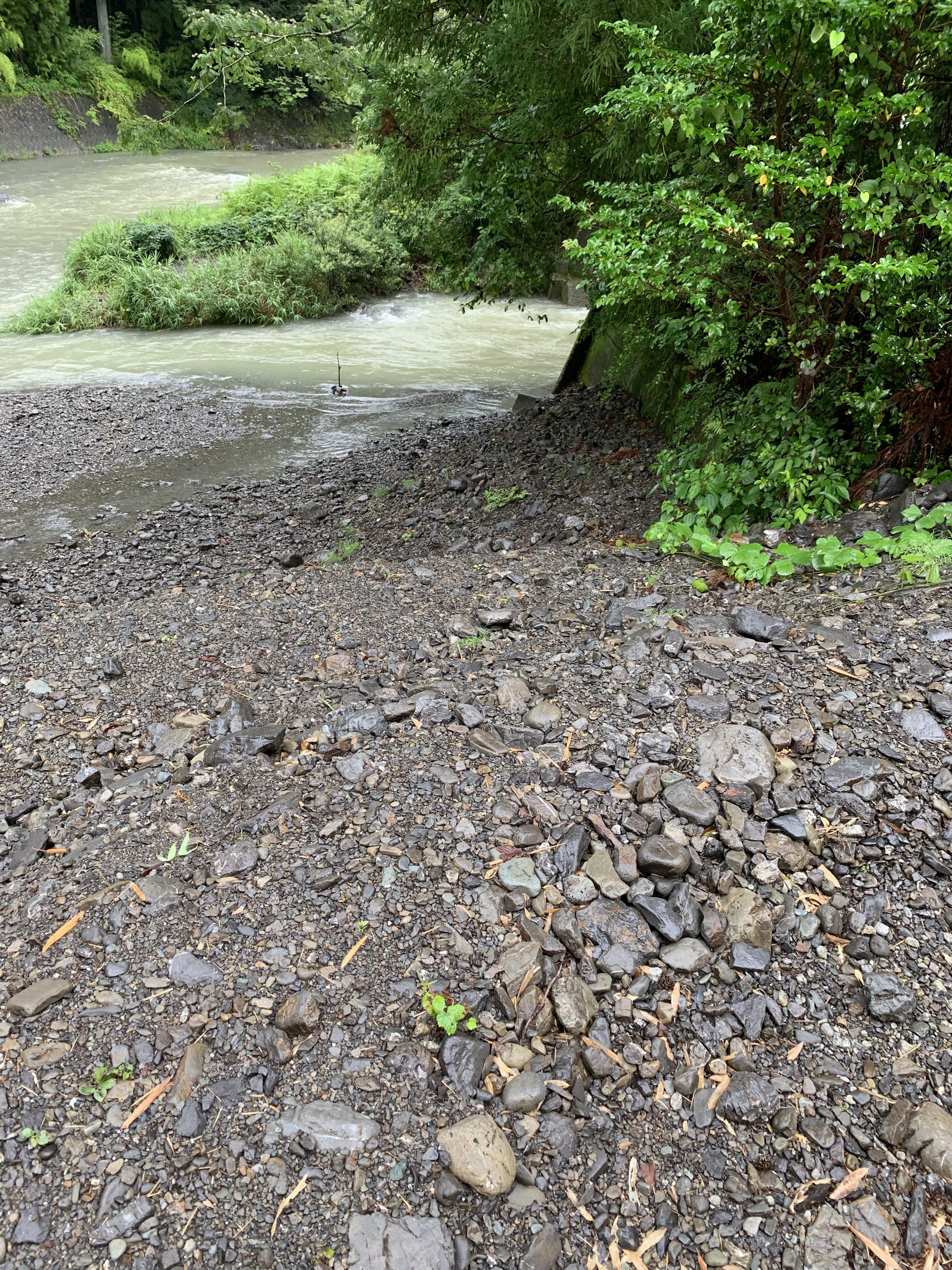 朝から泥濁りきわの浅くて色の薄い所で釣れました。