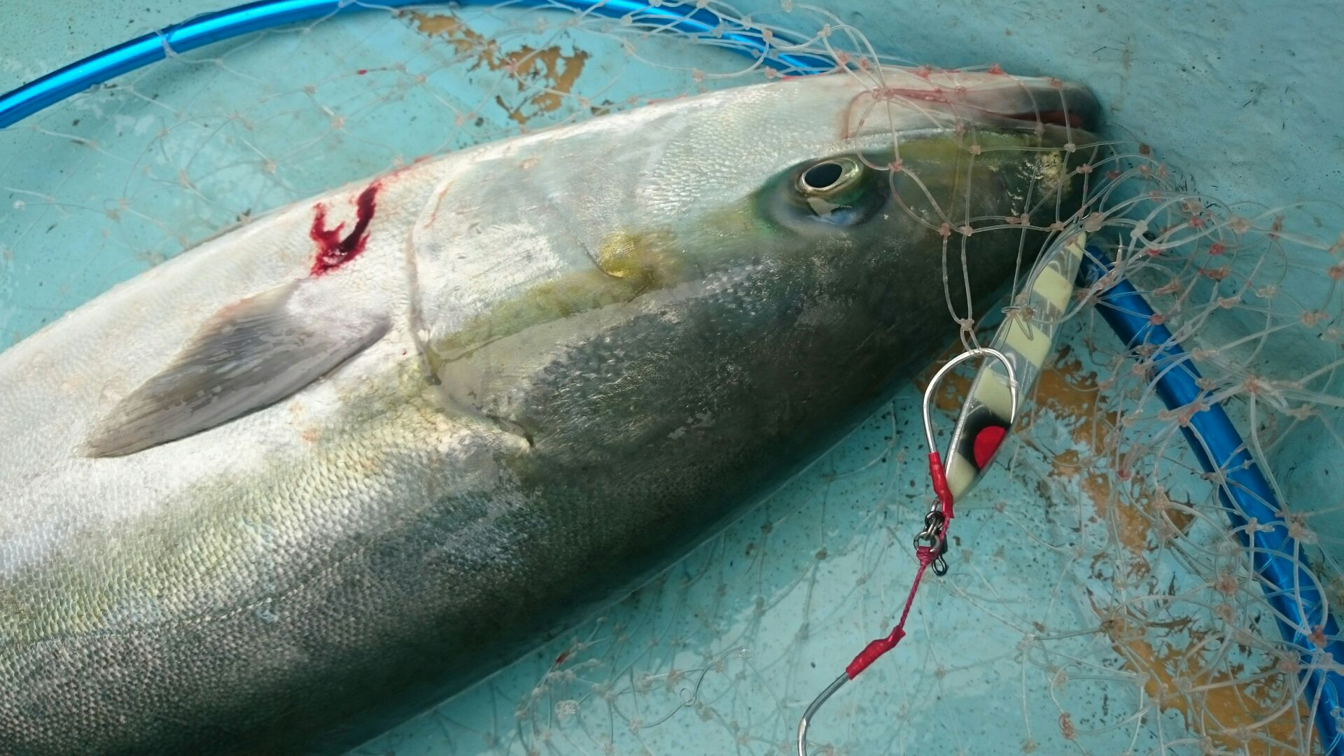 CBONEの名作ジグのクイックゼロワンと同じ使い方で良く釣れます! ハヤブサ ジャックアイスロー200g コストパフォーマンス抜群!