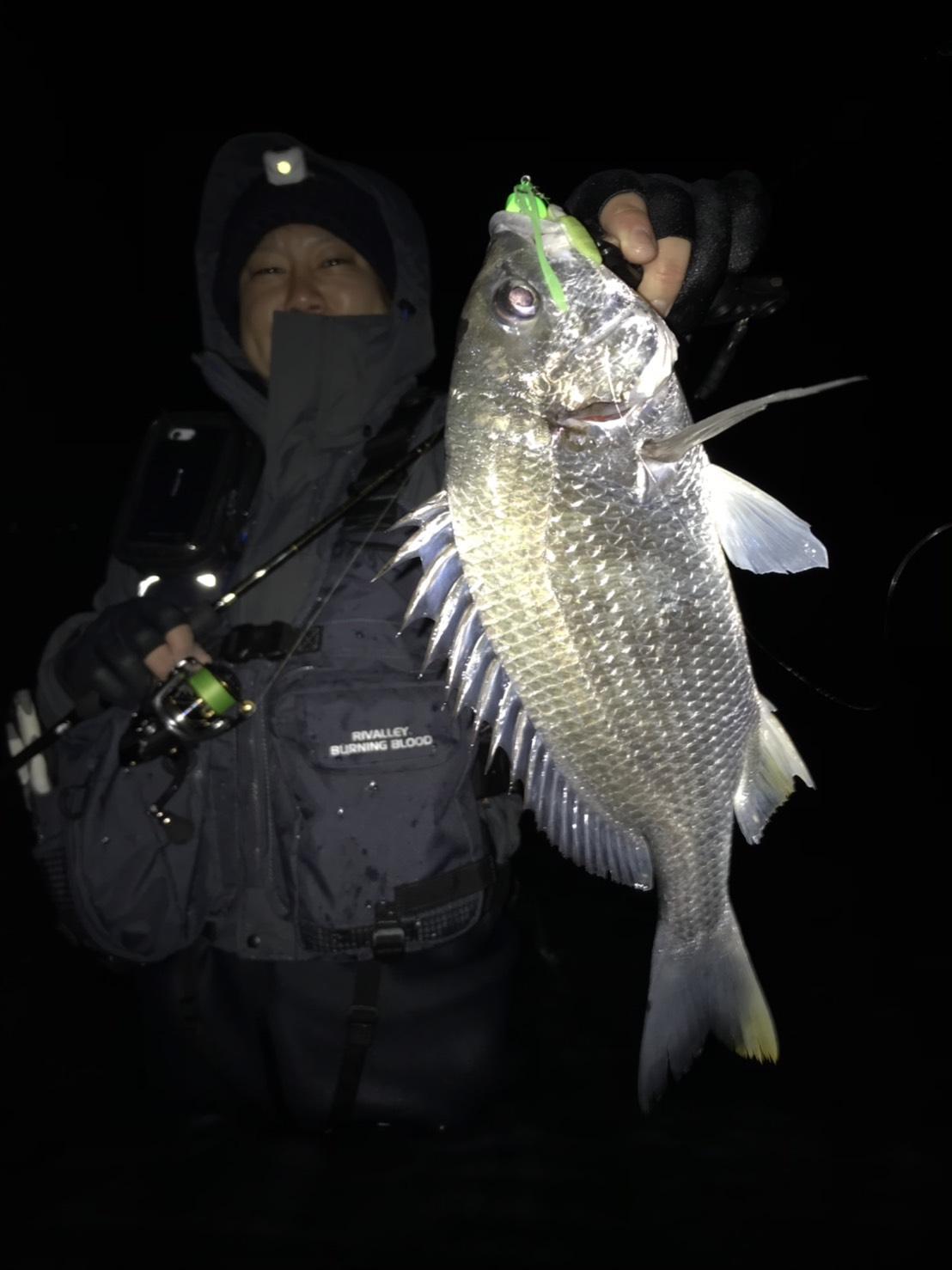 冬のチヌボトムゲームは水温の安定しやすい少し深いブレイクの淵などで魚が固まっているので意外と釣りやすいですよ♪