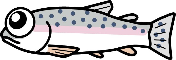 松川湖 ドナルドソンニジマス釣れてます!