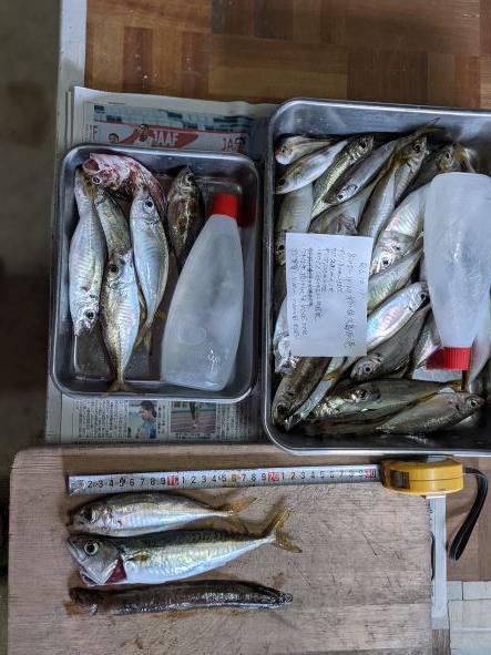 一部の根魚は、昨日のハゼ釣り残り餌での投げ釣り。