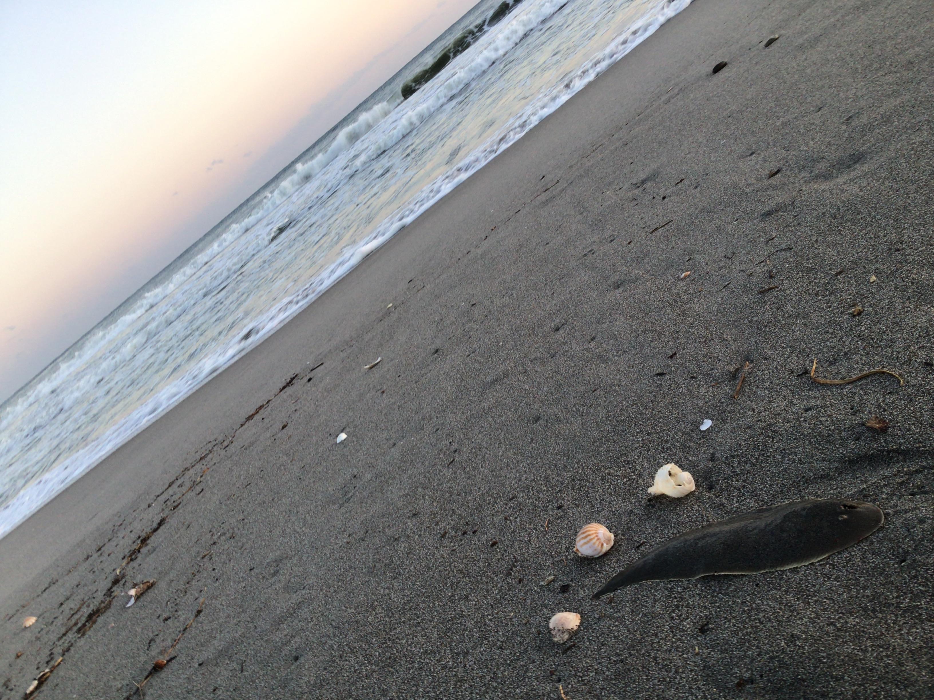 貝殻などたくさん打ち揚げられてました。ヒラメ越しの海デス❗️
