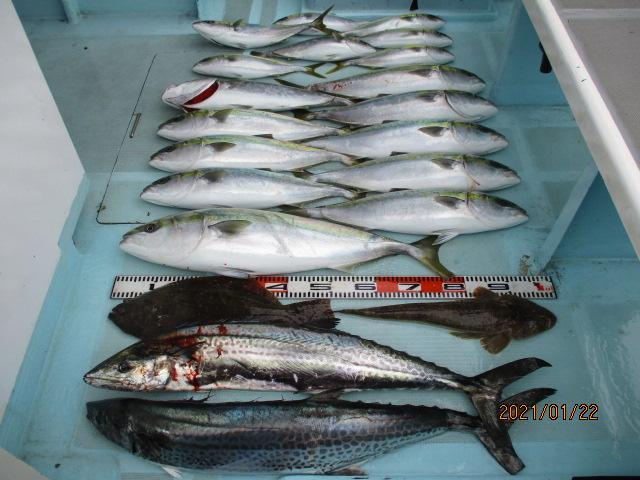片舷だけの釣果ッ(^-^)デカザワラ、肉厚寒ビラメ、マゴチ、マル、ワラサ、ハマチッ‼︎
