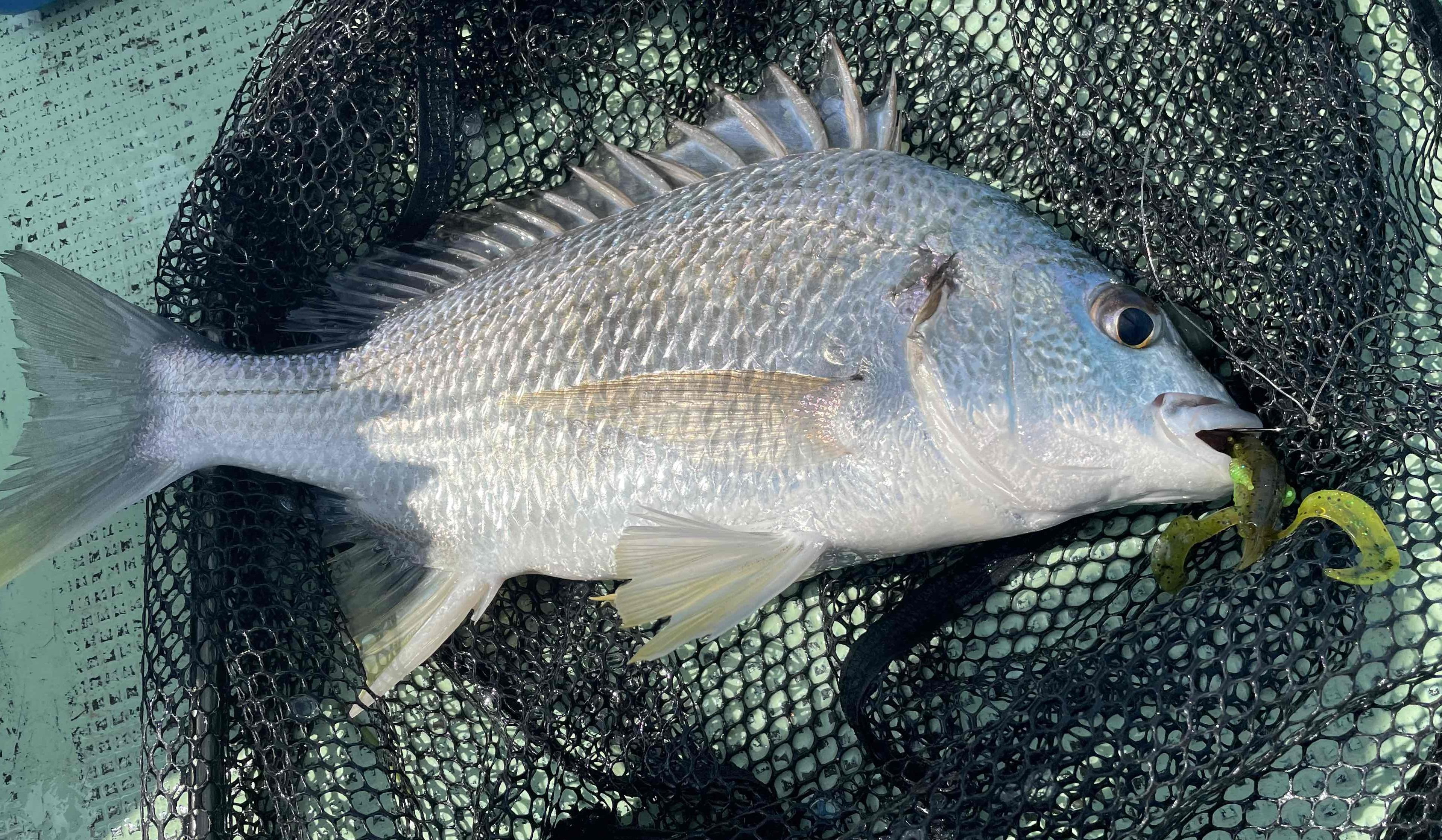 当店パートナーさんの釣果です。雨の影響も薄れてきたようで魚の活性が上昇中!!