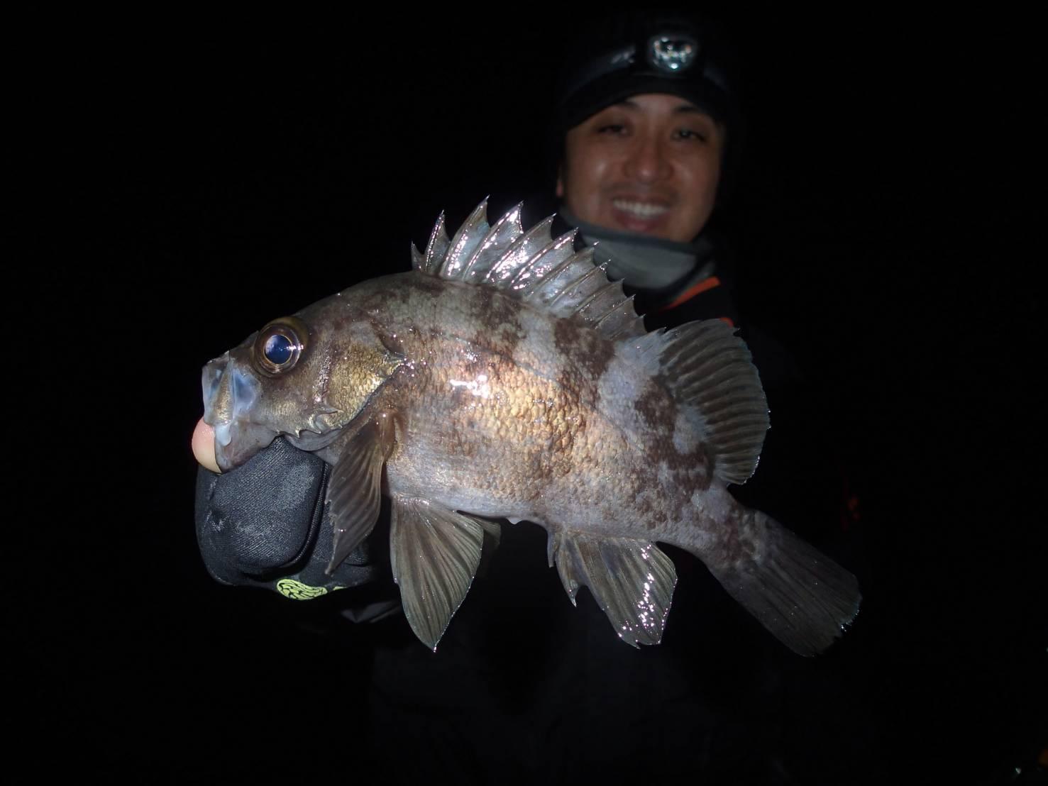 シュガーミノー50Sでヒット!!巻いても、止めても、流しても釣れる浜名湖万能ルアーです!!