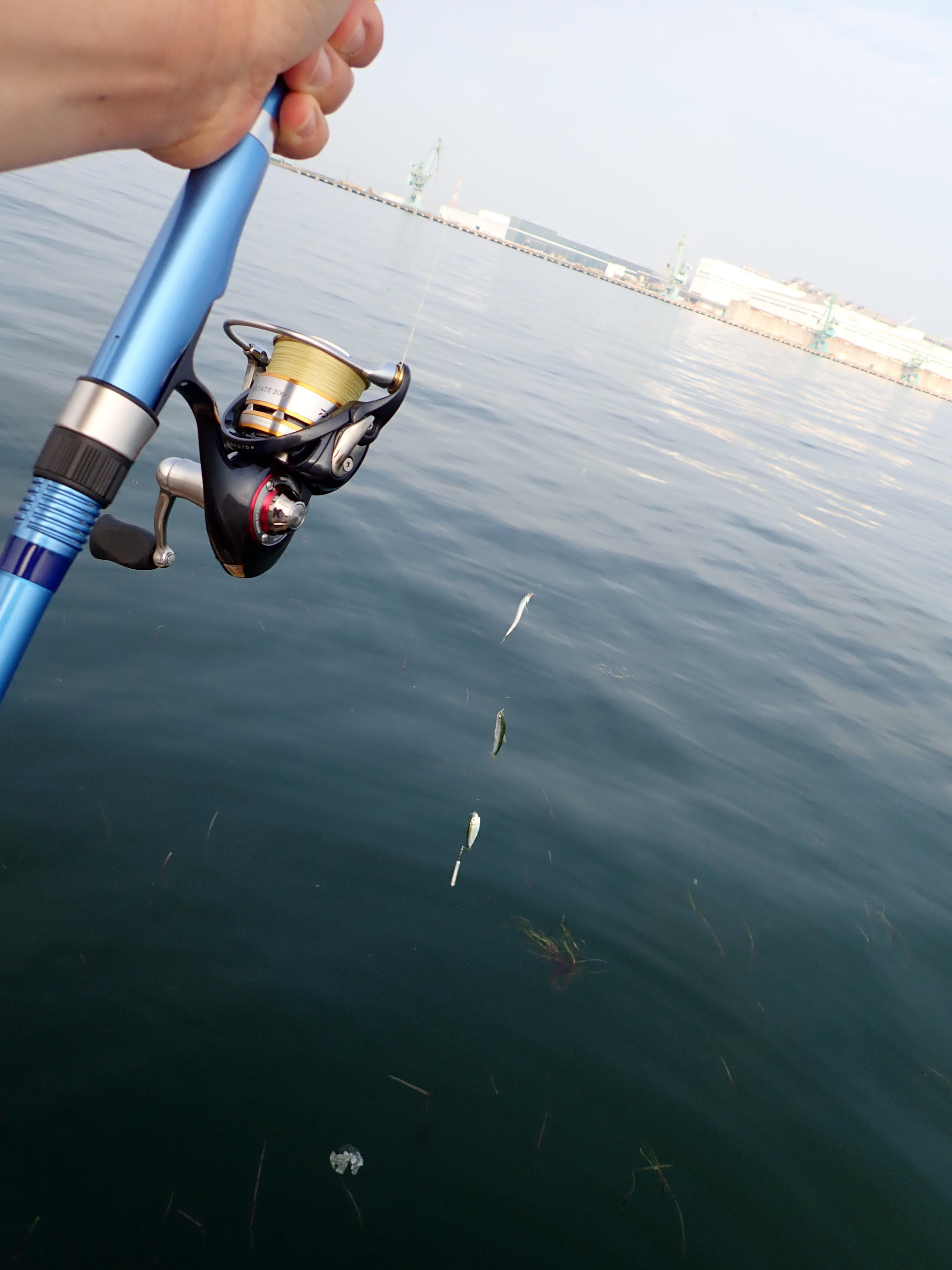 ちょっと投げて巻くだけでコレ。足元に垂らして誘っても良し!とにかく良く釣れました。